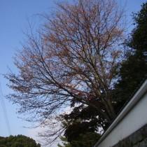 hirokawa17